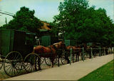 Amish Horse and Buggies